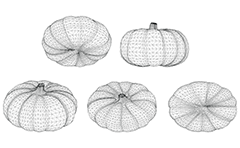 Wire model with different views of garden pumpkin. Polygonal vector drawing with isolated objects.